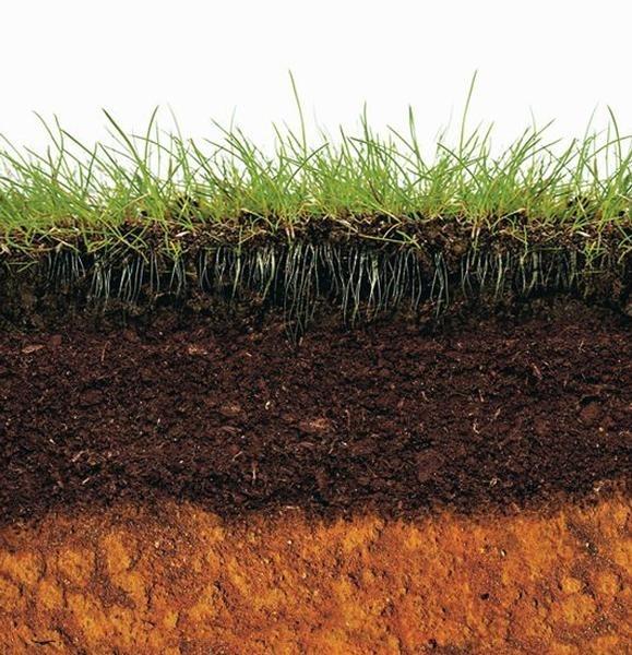 слой почвы картинки оголить тело